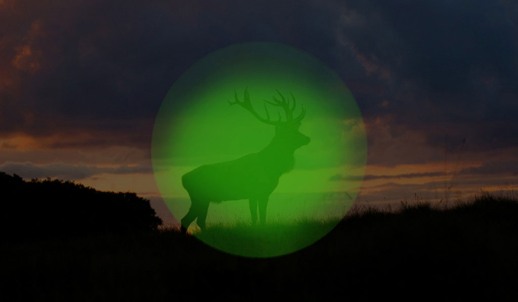 Der Hirsch Nachsichtgerät
