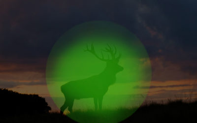 Wärmebildtechnik für die Jagd – Was sieht man mit einem Wärmebildgerät?