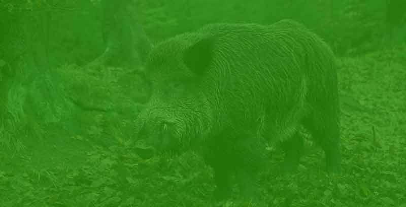wildschwein_filter